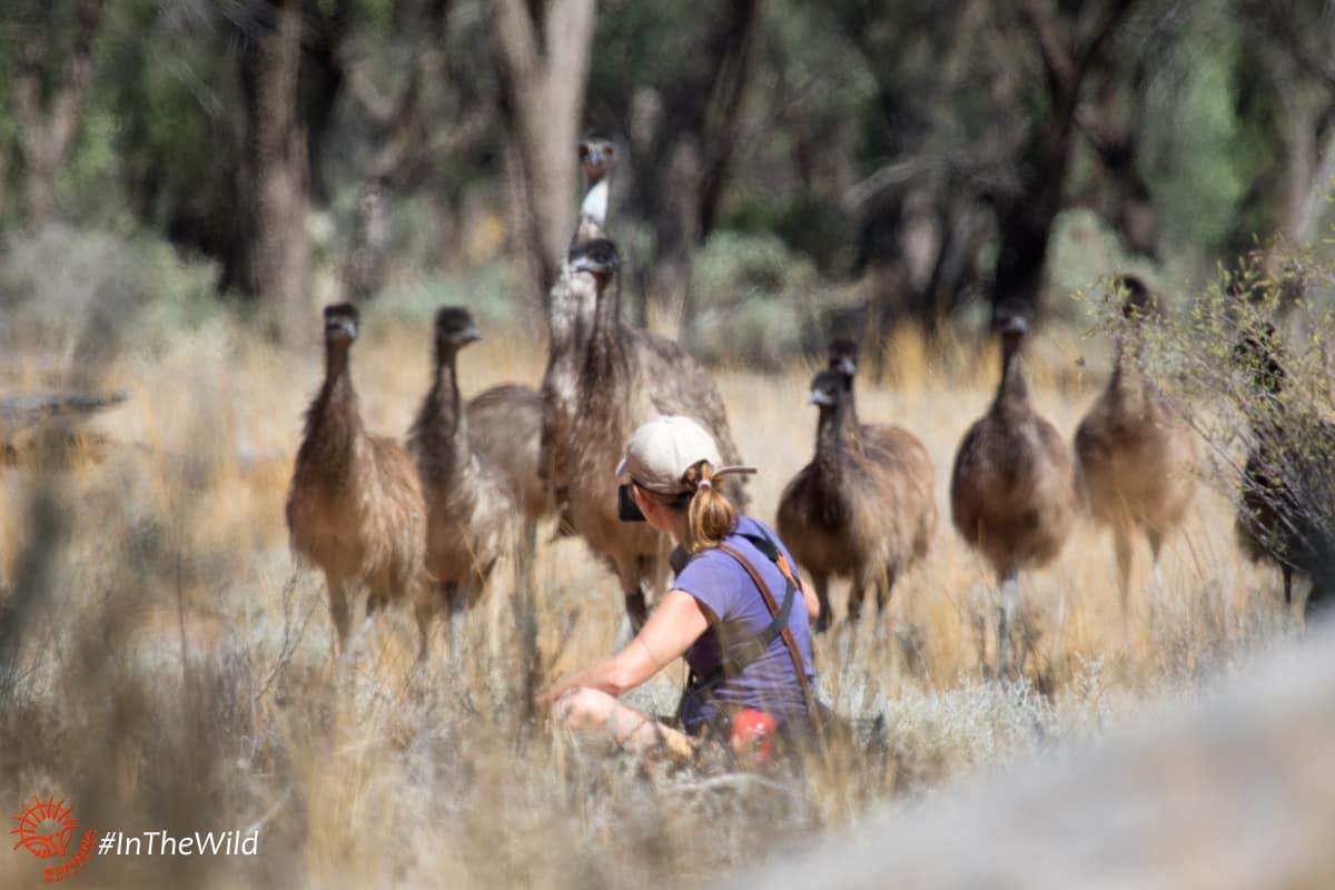 mungo outback tour