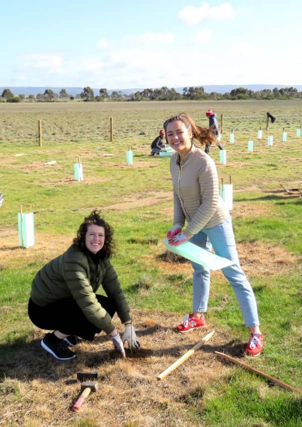 corporate tree planting volunteers