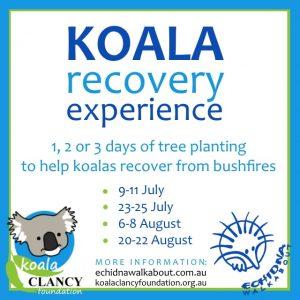 Koala Recovery Experience