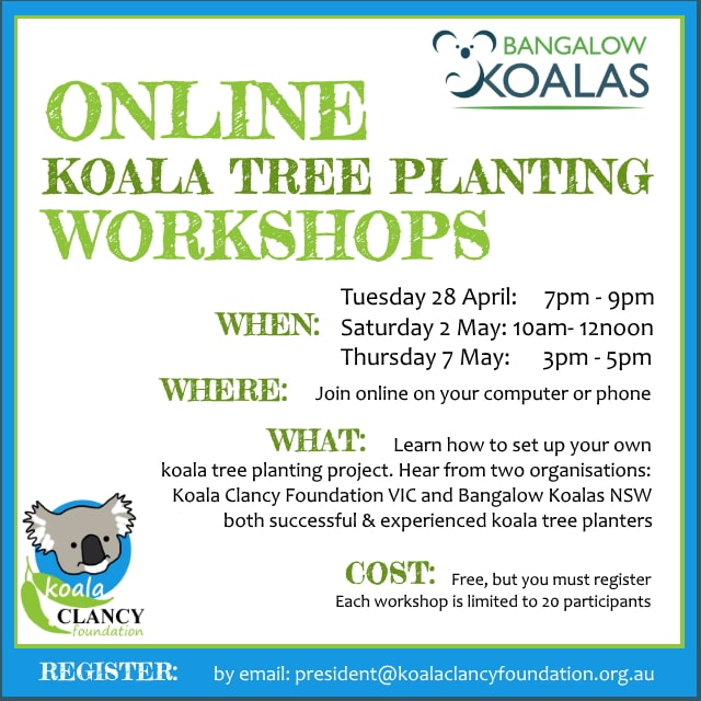 koala tree planting information event