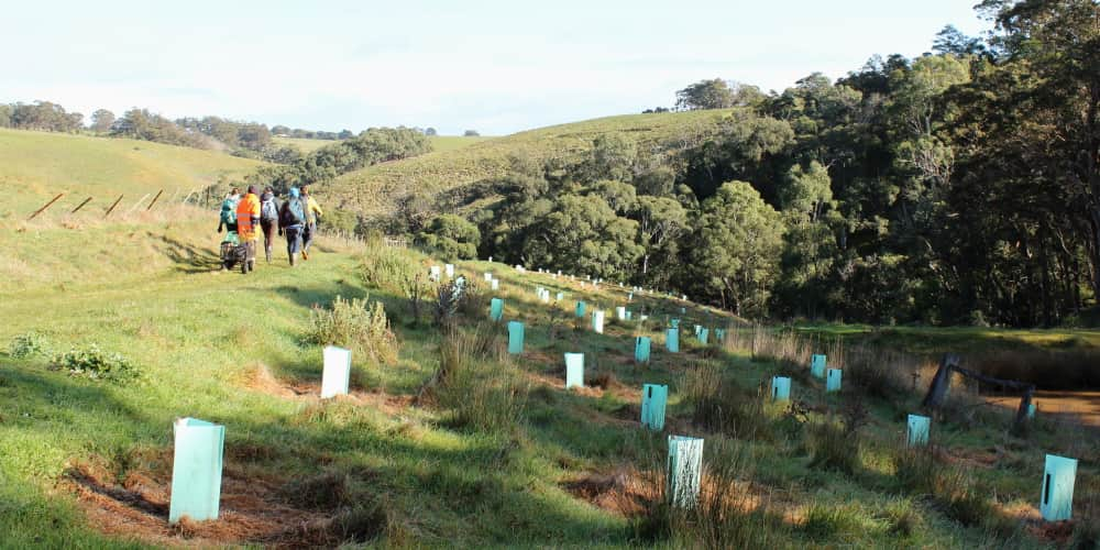tree planters starting their day Australia