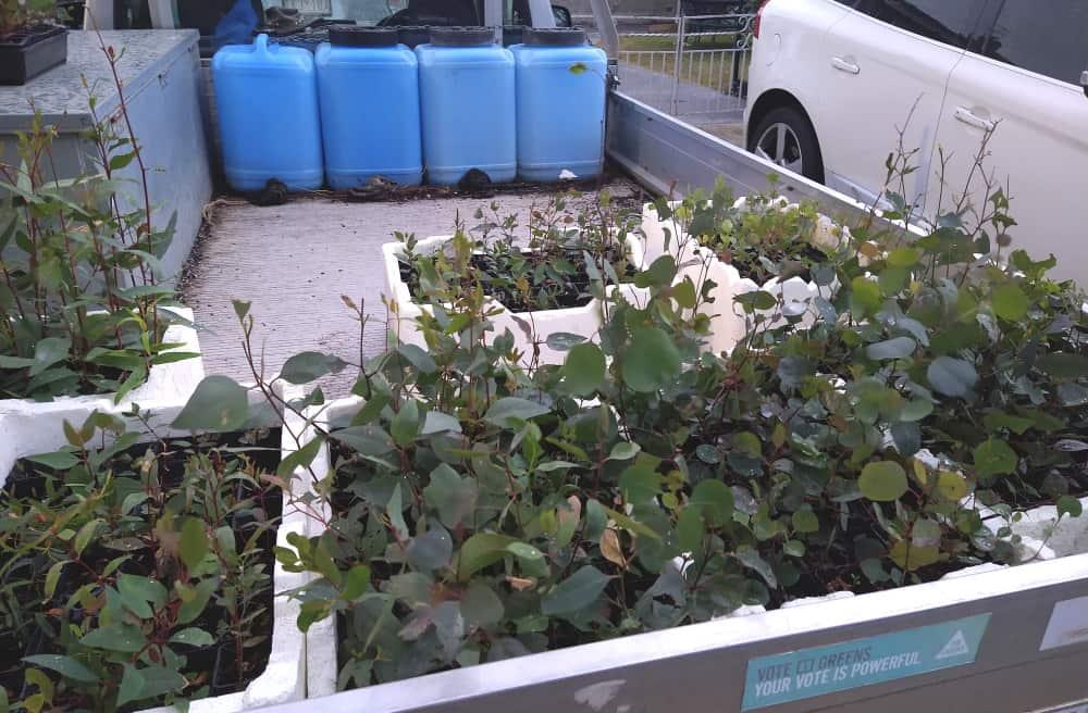 vehicle loaded with tree seedlings