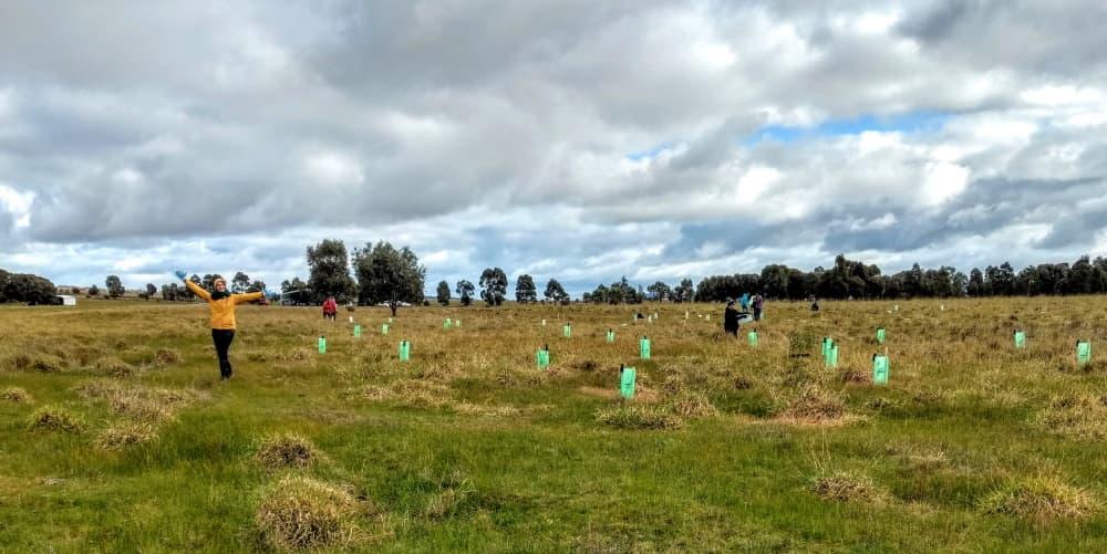 tree planting complete australia