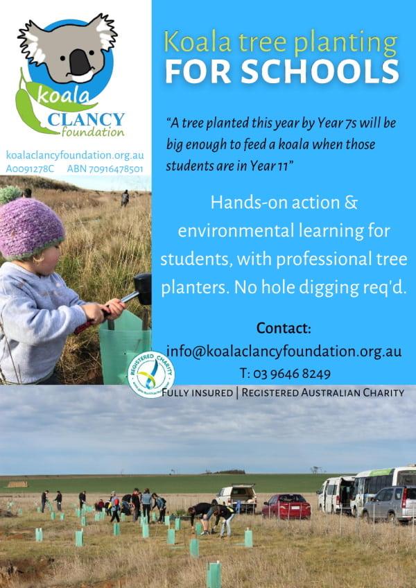 koala tree planting for schools