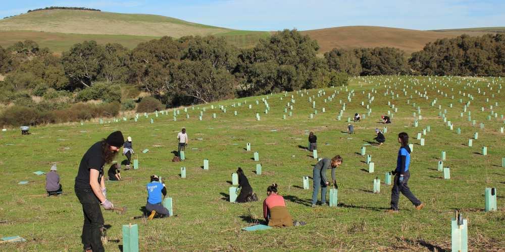 university students planting trees Geelong 2021