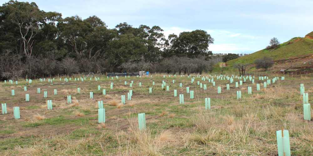 tree planting site Geelong after