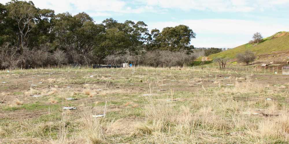 tree planting site Geelong before