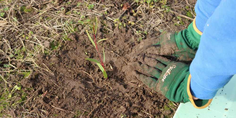 hands gum tree planted 2021