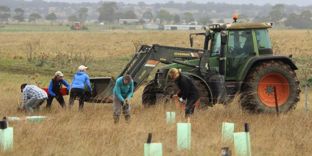 tree planting volunteers tractor