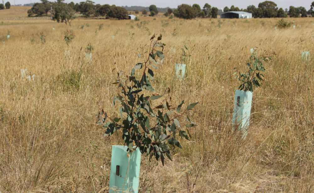 Successful tree planting Fighting Climate Disaster