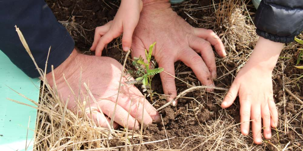 Man child father son hands planting trees