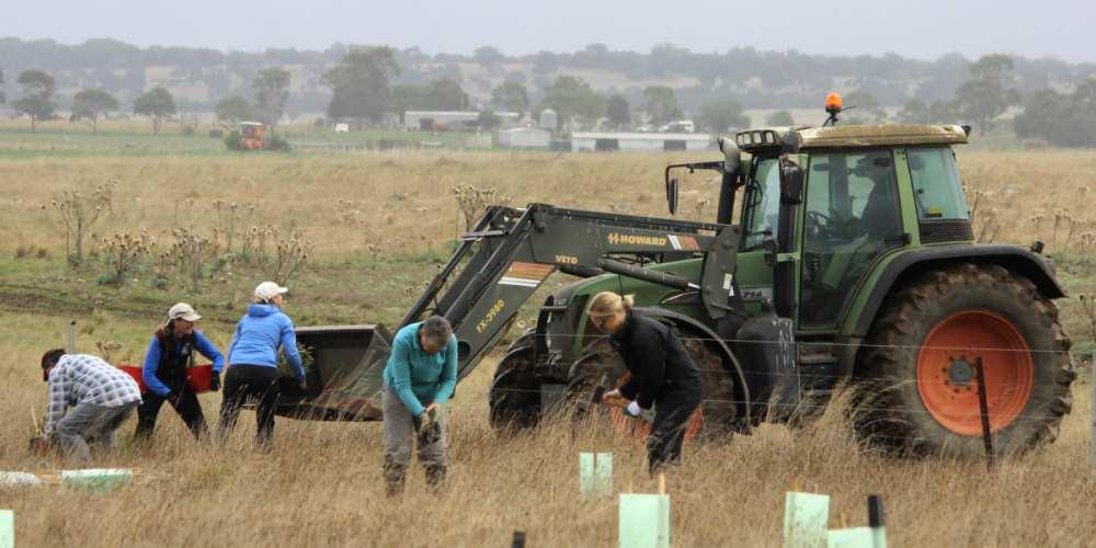 Community Organisation tree planting tractor